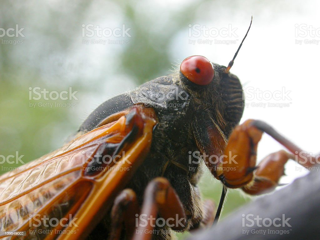 Bugs Eyelashes Stock Photo More Pictures Of Alien Istock