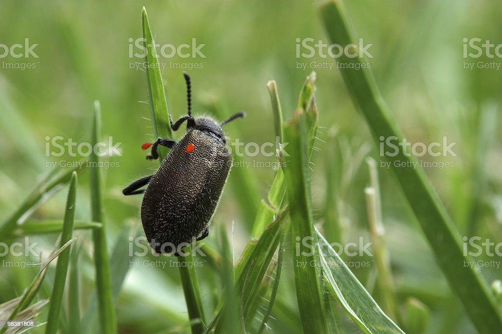 Bugs on bug royalty-free stock photo