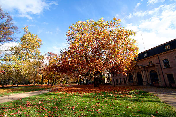 Building and tree in autumn An old building and trees in autumn. erlangen stock pictures, royalty-free photos & images