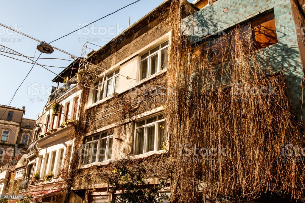 Building covered with dry ivy stock photo