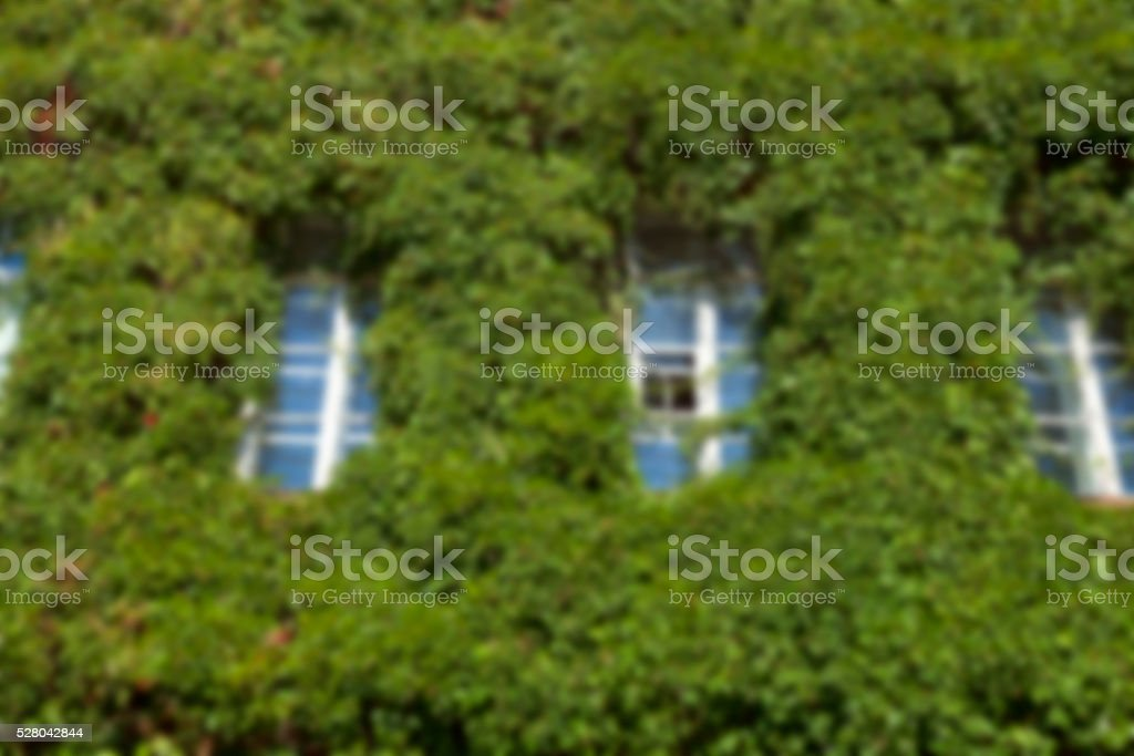 building in the ivy stock photo