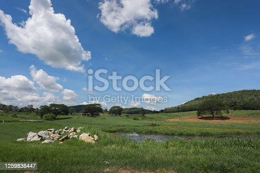 istock Building land for new construction project on green meadow, plot for construction area. 1259836447