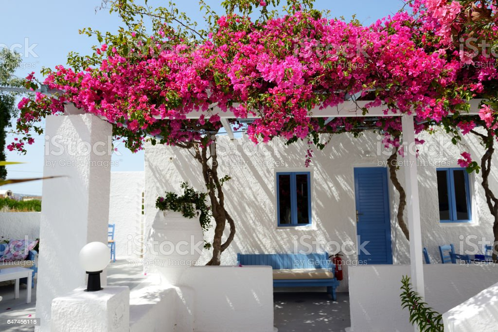 5fa28d98bdf5 Building of hotel in traditional Greek style with Bougainvillea flowers