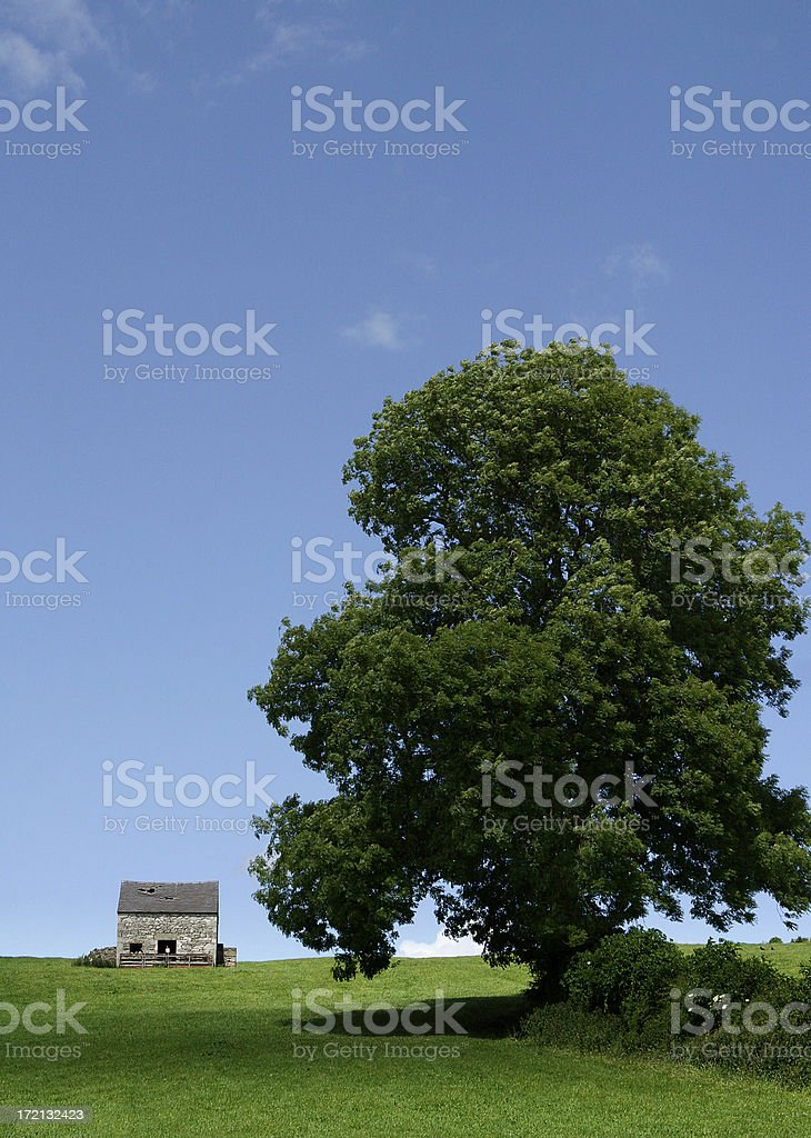 Building & Tree royalty-free stock photo
