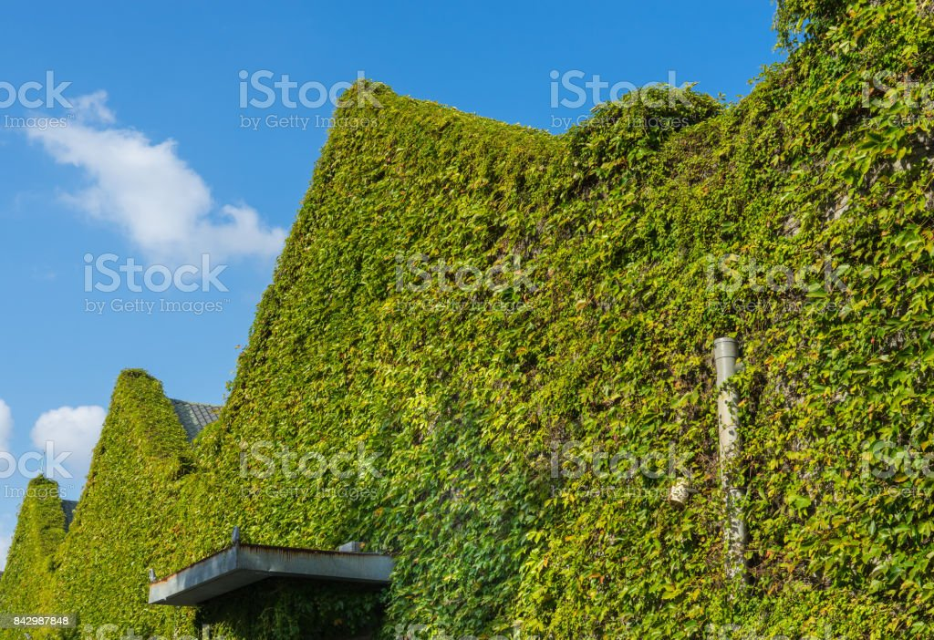 Buildings covered by green plants stock photo
