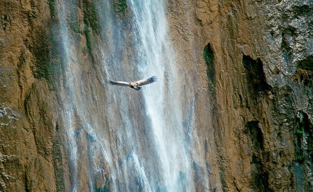 buitre leonado cerca de la cascada del chorro de las sierras de cazorla, segura y las villas. - thun switzerland stock-fotos und bilder