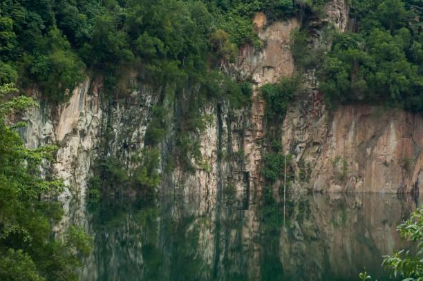 bukit timah - заповедник дикой природы стоковые фото и изображения
