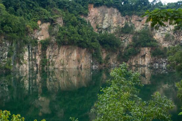 bukit timah - nature reserve stock photos and pictures
