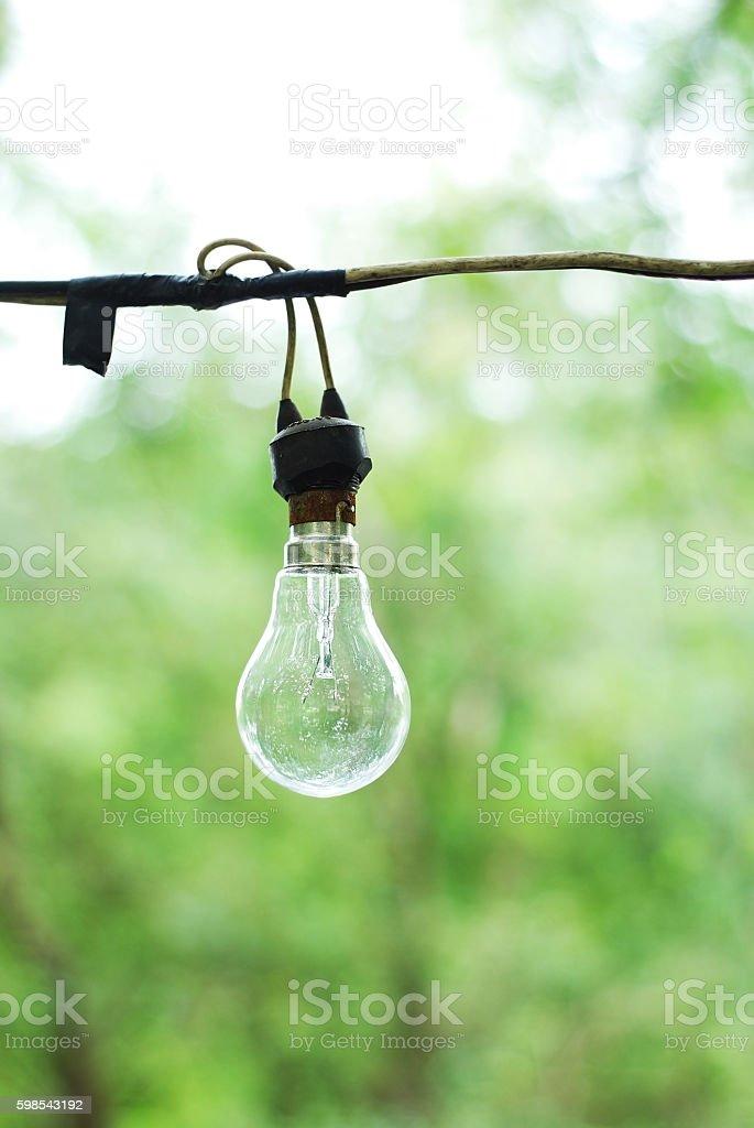 Bulb in green forest photo libre de droits