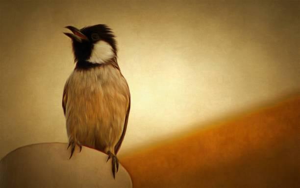 bulbul bird - saudi national day zdjęcia i obrazy z banku zdjęć