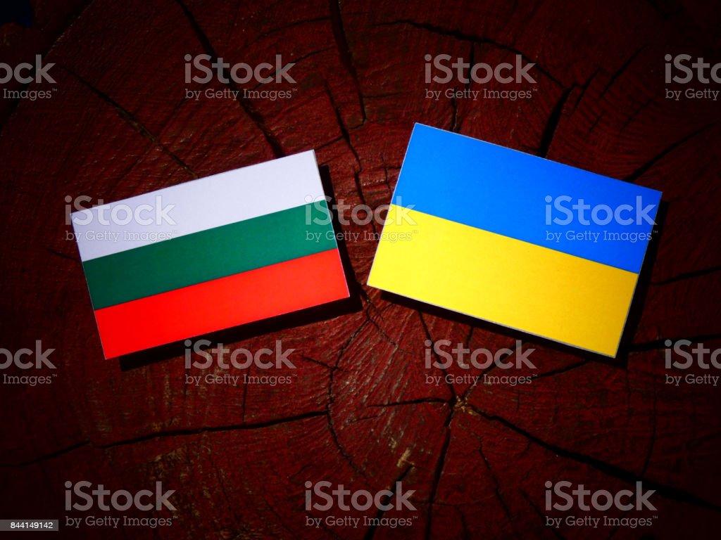 Bulgarian flag with Ukrainian flag on a tree stump isolated stock photo