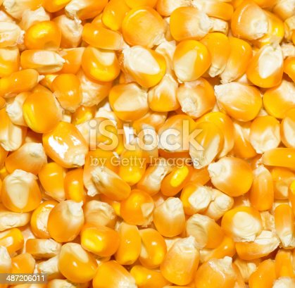 istock Bulk of corn grains 487206011