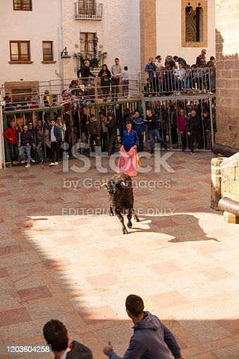 Xavea, SPAIN - January 26, 2020: A bull chases a guy down the street during the celebration of St. Sebastian in front of residents and tourists