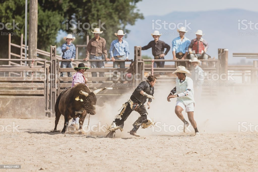 Bull Chasing Bull Rider during Rodeo Competition stock photo