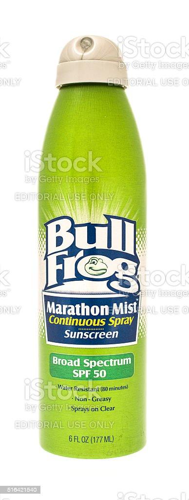 Bull Frog stock photo