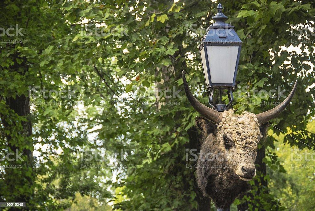 Bull Head stock photo