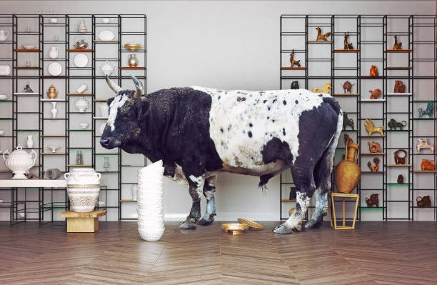 bull in a China shop. stock photo