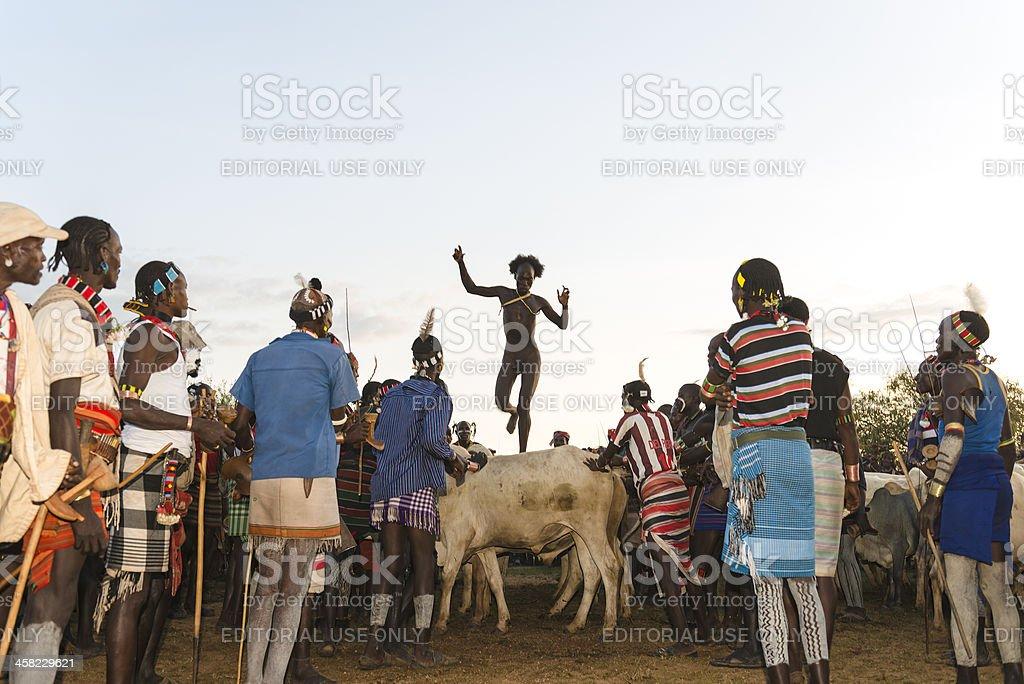 Bull jumping ceremony stock photo