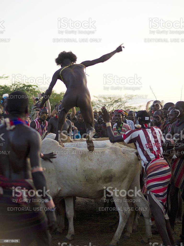 Bull jumping royalty-free stock photo