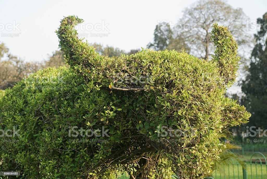 Bull made out of shrub royalty-free stock photo