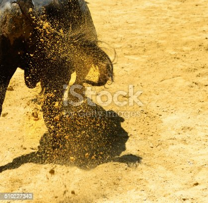 istock Bull picking up dirt in arena 510227343