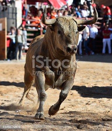 istock bull 1149629923