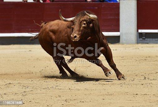istock bull 1166281898
