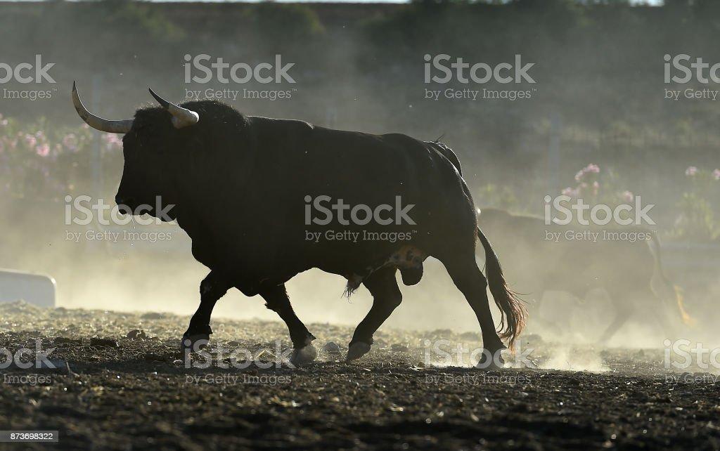 公牛圖像檔
