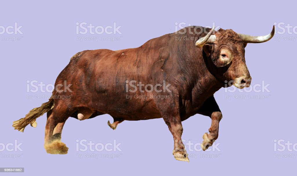 Best Angry Bull Stock Photos  Pictures  U0026 Royalty