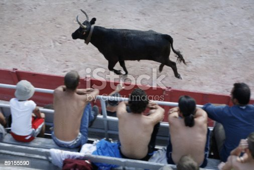 istock bull racing competition 89155590