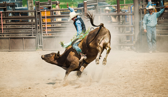Cowboy Riding a BIG BULL in a Rodeo Arena in Utah. He is hoping for a good 8 second ride to make it to finals.  Cowboy supporters looking on in the background.