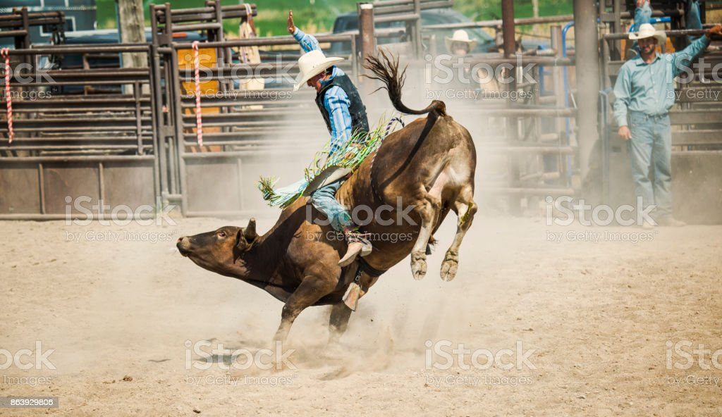 Bull Rider Going For That Golden 8 Second Ride stock photo