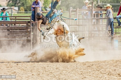 Bull Rider is Thrown from a Bull during Rodeo Competition