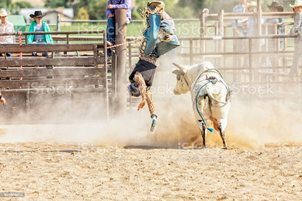 Bull Rider is Thrown from a Bull during Rodeo Competition stock photo