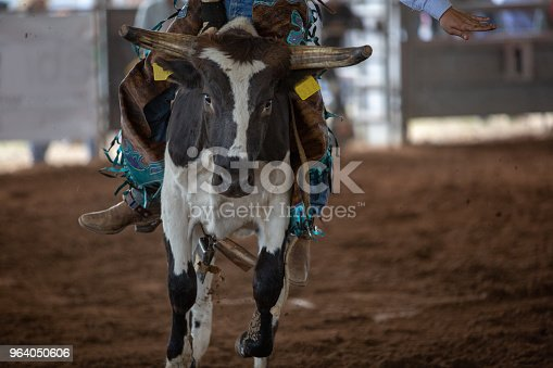 Close up of a calf with cowboy on its back being ridden in an event at an indoor country rodeo in Australia