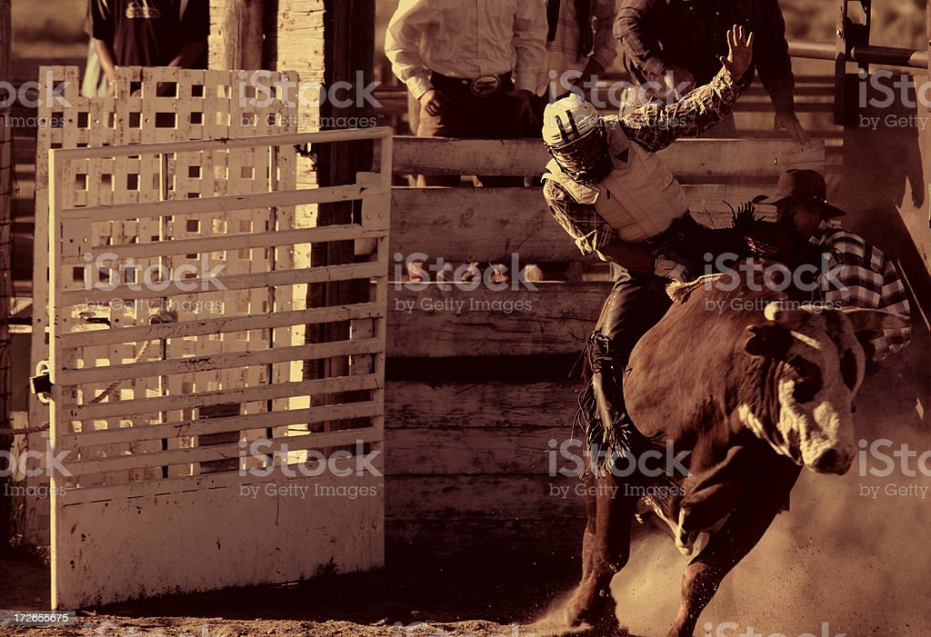 Bull Riding I (Burnt Sienna) stock photo