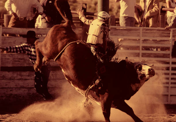 Bull Riding II (Burnt Sienna) stock photo