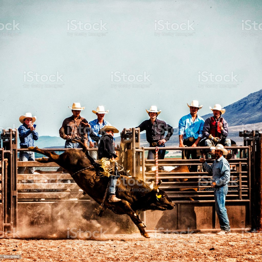 Bull Riding stock photo