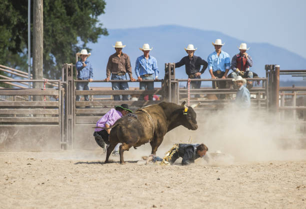 Bull Riding Sequence stock photo