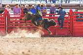 Utah Bull Riding Cowboy in Western Outdoors and Rodeo Stampede Roundup Riding Horses Herding Livestock iStock Photoshoot Quarter Horse Roping, Riding, Saddle Bronc, Bareback, Bull Riding, Goat Tying, Steer Roping, Team Roping, Branding, Herding, Horse roundup Red Angus, Black Angus and Longhorn Beef Cattle bulls cows and calves in Eastern Utah high altitude livestock herds in the Rocky Mountains (photos professionally retouched - Lightroom / Photoshop - original size 8688 x 5792 canon 5DS Full Frame Downsampled as needed for clarity)