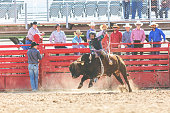 Bull Riding Utah Cowboys Western Outdoors and Rodeo Stampede Roundup Riding Horses Herding Livestock iStock Photoshoot