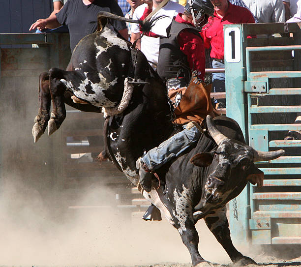 Bull Riding-3 stock photo