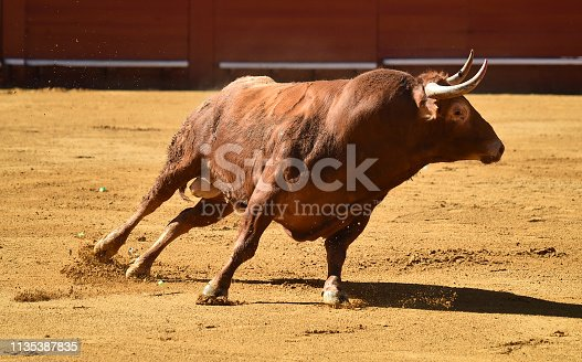 istock Bull running 1135387835