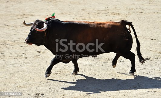 spanish bull in bullring