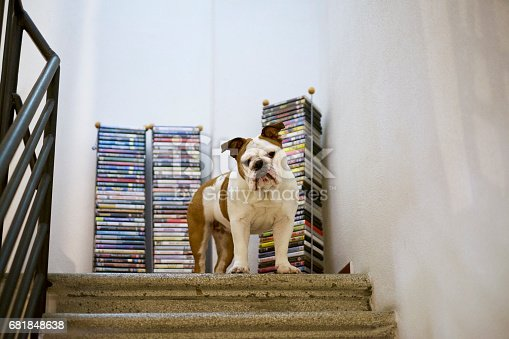 Bulldog at home with a collection of cinema DVDs (titles are out of focus and unreadable)