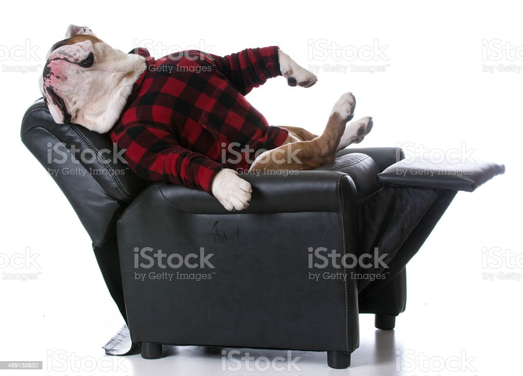 Bulldog dressed in plaid shirt passed out on mini recliner royalty-free stock photo  sc 1 st  iStock : mini recliner chairs - islam-shia.org