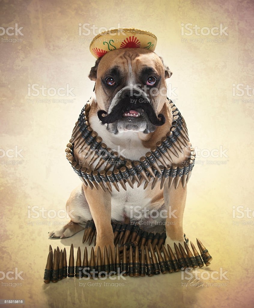 4f0c0d5605f Bulldog Portrait Dressed As A Bandito Stock Photo   More Pictures of ...