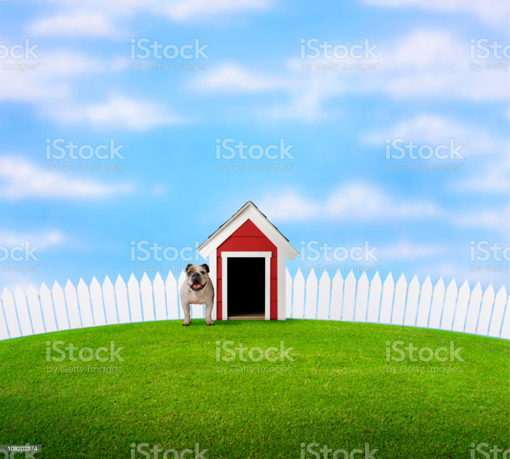 Bulldog Standing in Yard Beside Doghouse royalty-free stock photo