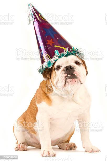 Bulldog wearing a party hat isolated on white picture id157609978?b=1&k=6&m=157609978&s=612x612&h=cpb6ytbxujzfqylin6pyq3vyf2begt0eycc hx6ra8u=