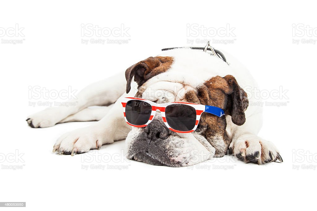 Bulldog Wearing American Themed Sunglasses stock photo